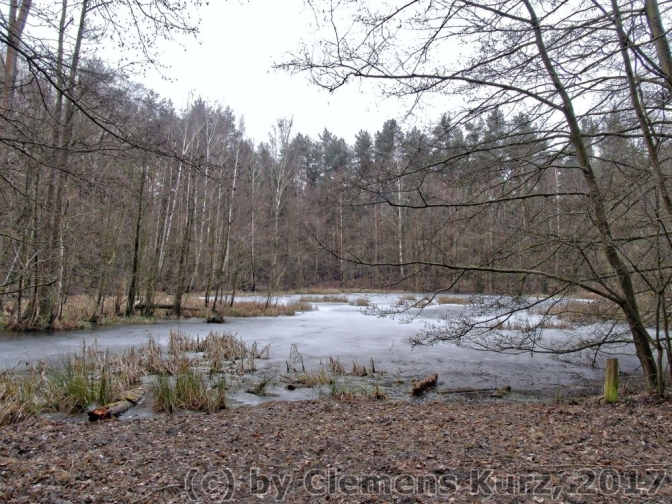 Rückblick: durch den Forst – in Berlin-Spandau